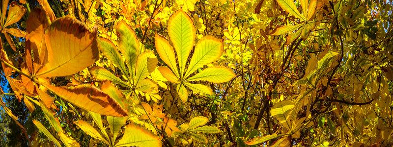 rsz_autumn_leaves