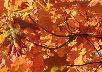Autumn tips: Learn about utilizing the Metal element to your benefit!
