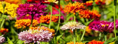 rsz_flowers