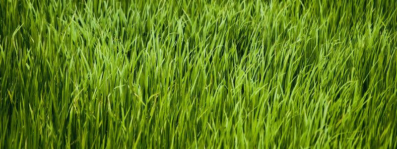 rsz_grass