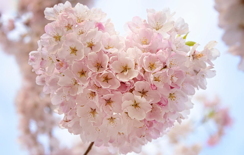 Heart Blossoms-faye-cornish-512491-unsplash-crop